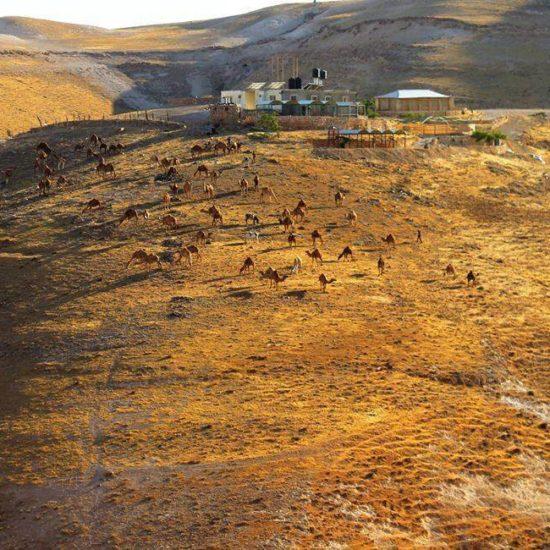 animals-in-the-judean-desert